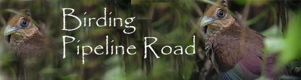 Pipeline Road Tours